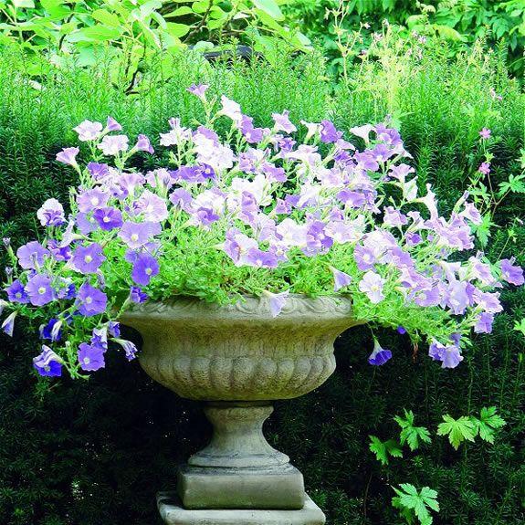 Medium Staffordshire Vase Garden Ornament